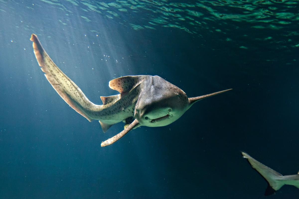 Aquarium de Vendée requin