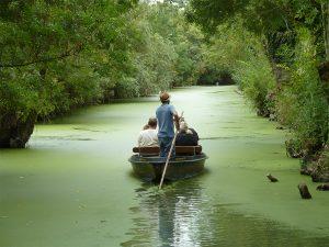 Balade en barque dans le Marais Poitevin au départ de l'Embarcadère de l'abbaye